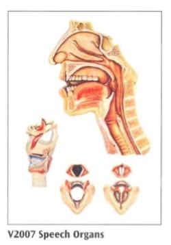 anatomska karta